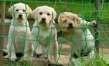 ペット法務